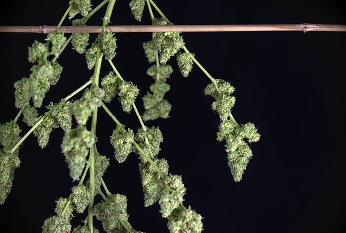 Medicinal Cannabis Marketplace